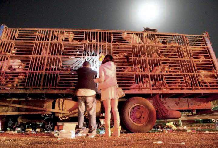 Les actions de militants contre les camions transportant des chiens destinés à l'abattage (ici à Pékin) se multiplient