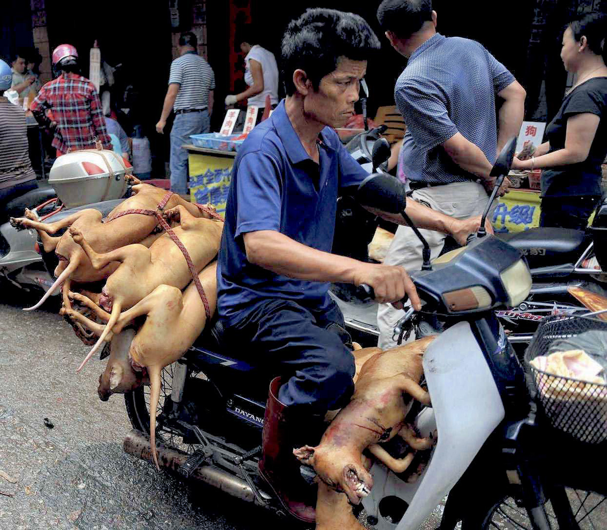 Yulin fêtes des chiens tués